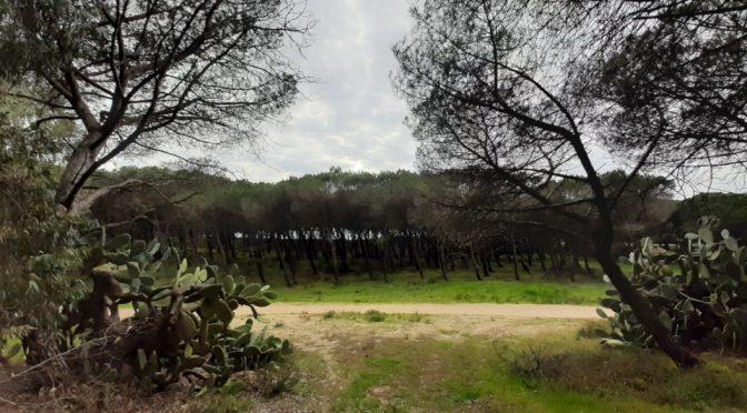 Golf a Torregrande, regaliamo la pineta senza nulla in cambio?